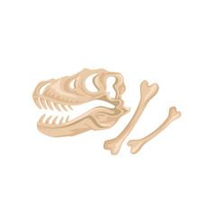skull and bones tyrannosaurus rex ancient vector image