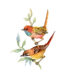 Watercolor forest birds on twig vector image vector image