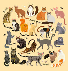 cat breeds cute pet animal set 21 cats vector image