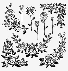 collection roses vector image