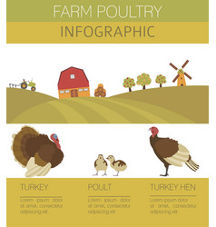 Poultry farming turkey family isolated on white vector