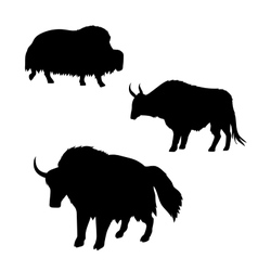 Yak silhouettes vector