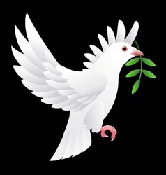 Dove flying vector image
