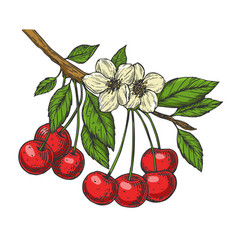 cherry branch line art sketch vector image