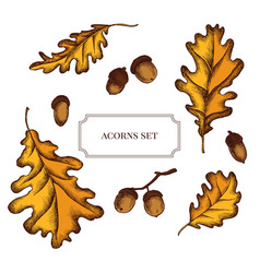 Collection of hand drawn acorns and oak vector