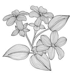 Decorative stephanotis vector