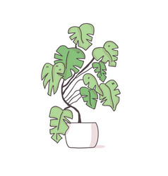 monstera in a pot tropical plant vector image