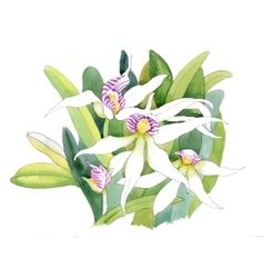 Watercolor orchid flowers vector