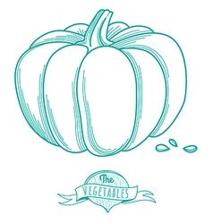 Outline hand drawn sketch of pumpkin flat style vector image