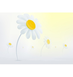 Chamomile flowers in mist vector