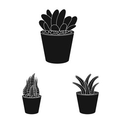 isolated object of cactus and pot symbol vector image