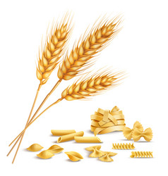 Realistic wheat spikelets and pasta vector