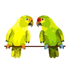Two parrots on white background vector
