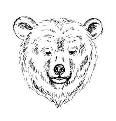 Sketch by pen of a bear head vector