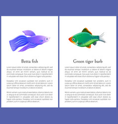 Betta fish with green tiger barb posters vector