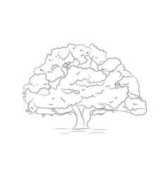 big tree drawing lines vector image