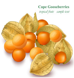 Cape gooseberries realistic isolated on vector