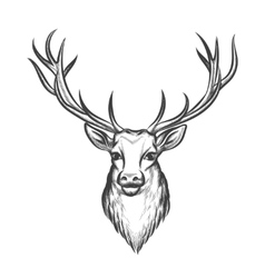 Hand drawn deer head vector