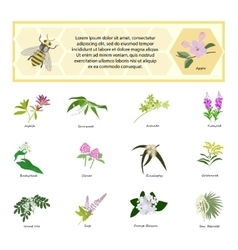 Honey set for banner flyer exhibitions posters vector