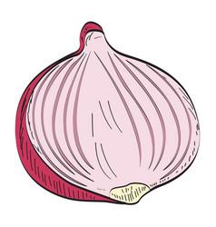 Isolated cut onion vector
