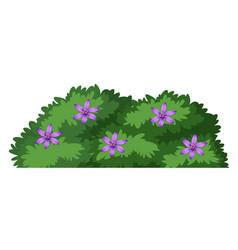 isolated plant bush on white background vector image