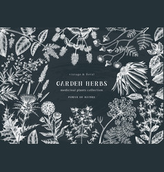 Medicinal herbs background on chalkboard hand vector