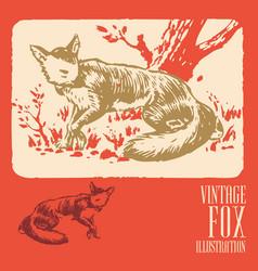 Vintage animal design fox vector