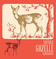 Vintage animal design gazelle vector