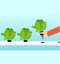 Farmer harvest hydroponics plants in design vector