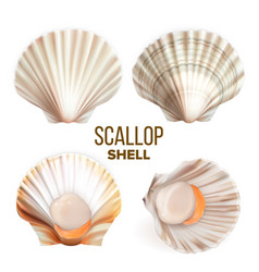 Scallop with meat in shell seafood set vector