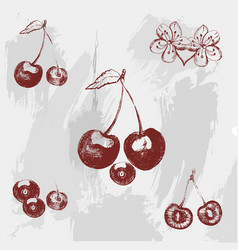 Vintage ink hand drawn cherry on grunge background vector