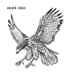 Golden eagle wild forest bird of prey hand drawn vector