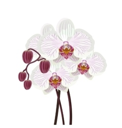 Purple orchid branch on white background vector image
