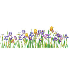 border with multicolor irises vector image vector image