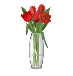 bouquet of red tulips in glass vase vector image