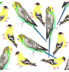 Budgies and american goldfinches seamless vector