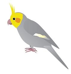 Cockatiel vector