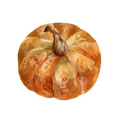 Orange pumpkin watercolor top view vector