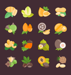 set flat icons nuts vector image