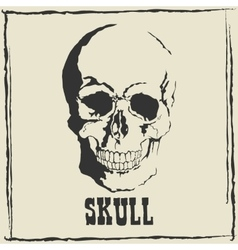 skull Grey background vector image