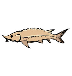 sturgeon freshwater fish vector image vector image