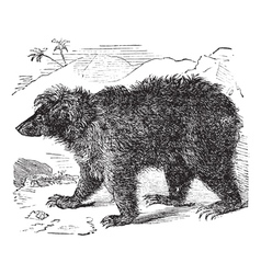 Asian bear vintage engraving vector image