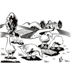 Geese in a busy grass eating from a manger vector