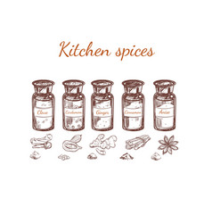 hand drawn kitchen spices set vector image