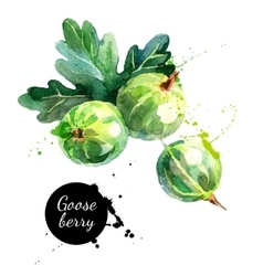 Hand drawn watercolor painting gooseberry on white vector