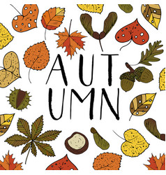 handdrawn unique autumn card with brush lettering vector image