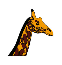 head giraffe animal herbivore african wildlife vector image