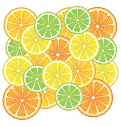 Various Citrus Slices3 vector