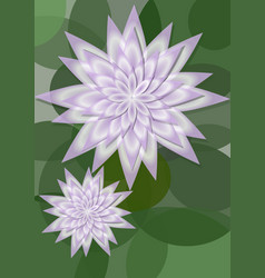 Waterlily background with big and small flower on vector