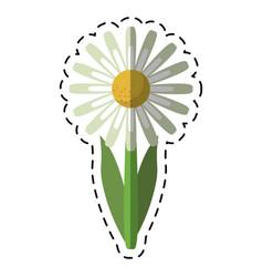 cartoon daisy floral garden spring vector image vector image